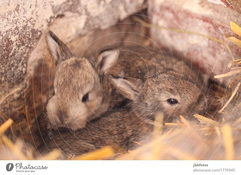 Nature Animal Joy Baby animal Environment Emotions Happy Food Contentment Nutrition Wild animal Happiness Joie de vivre (Vitality) Pet Hare & Rabbit & Bunny