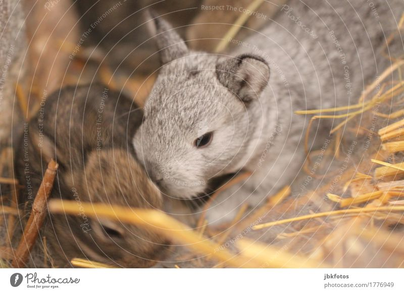Beautiful Animal Baby animal Playing Small Food Nutrition Wild animal Speed Cute Soft Delicate Pelt Animal face Hare & Rabbit & Bunny Paw