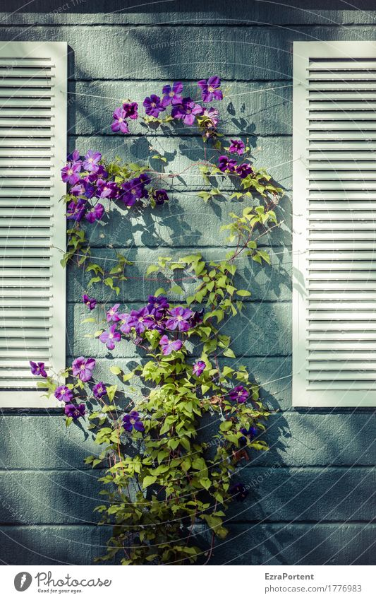 flower shop Plant Leaf Blossom House (Residential Structure) Manmade structures Building Wall (barrier) Wall (building) Facade Line Stripe Blue Violet White