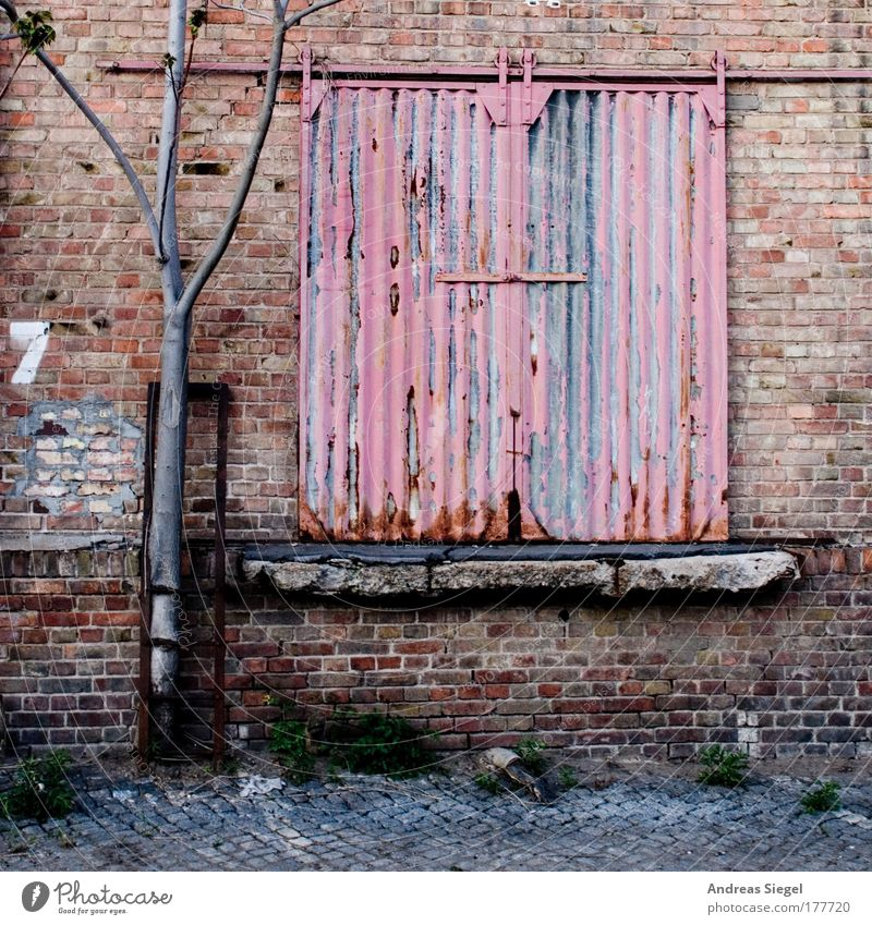 Old Tree Red Loneliness Wall (building) Architecture Gray Building Wall (barrier) Sadness Door Pink Closed Facade Gloomy