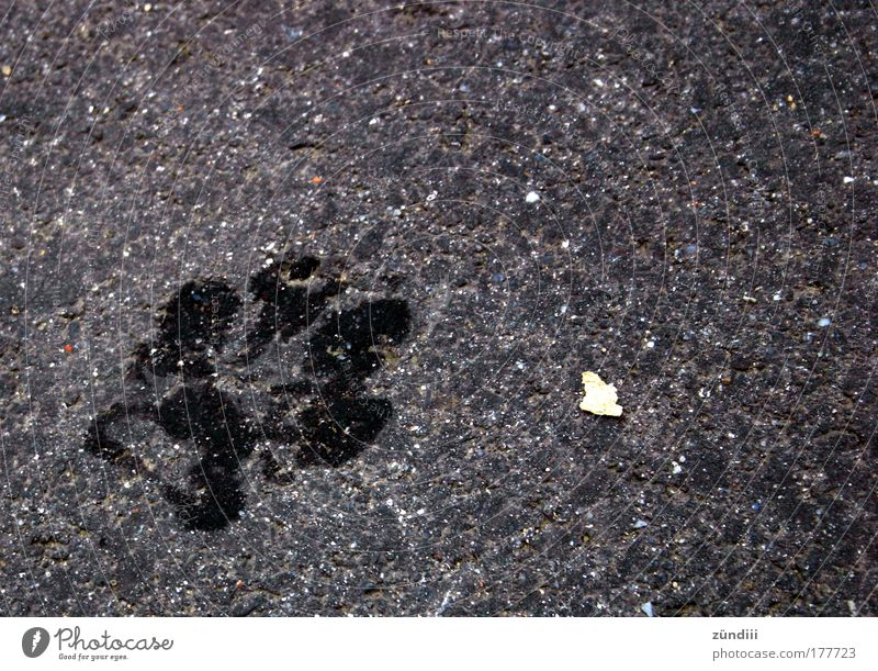 Dog Stone Wet Copy Space Paw Animal tracks Bird's-eye view Imprint