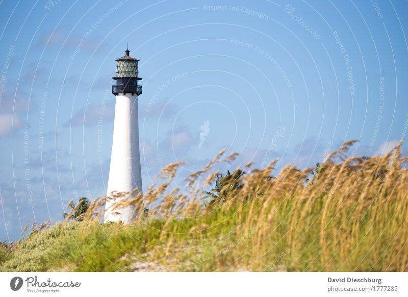 Lighthouse/Key Biscane Vacation & Travel Summer vacation Beach Ocean Island Nature Landscape Sky Clouds Beautiful weather Plant Coast North Sea Baltic Sea