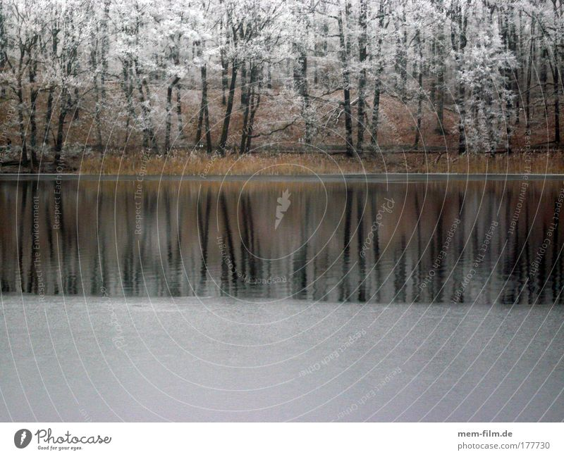 slaughter lake Hoar frost Winter Cold freeze over Lake bank Tree Freeze frosty over-freezing wetness Landscape Seasons