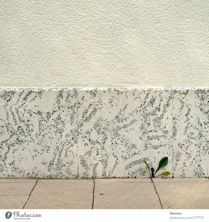 Green Plant Leaf Street Wall (building) Wall (barrier) Bright Power Facade Fresh Success Growth Exceptional Clean Tile Sidewalk