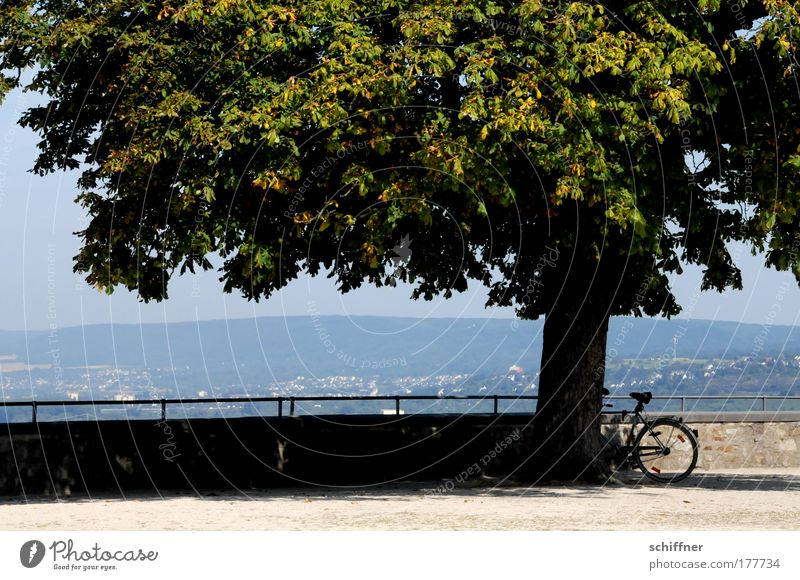 Tree Wall (barrier) Landscape Bicycle Vantage point Idyll Wheel Handrail Rhineland-Palatinate Shadow Fortress Koblenz