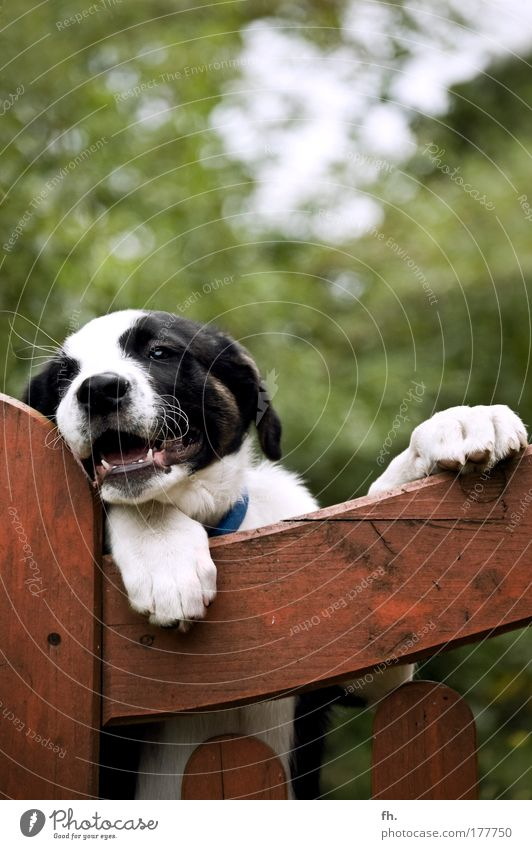 Animal affection Nature Beautiful weather Tree Garden fence Wooden fence Dog Animal face Paw Puppy 1 Observe Movement Looking Jump Stand Romp Wait Happiness