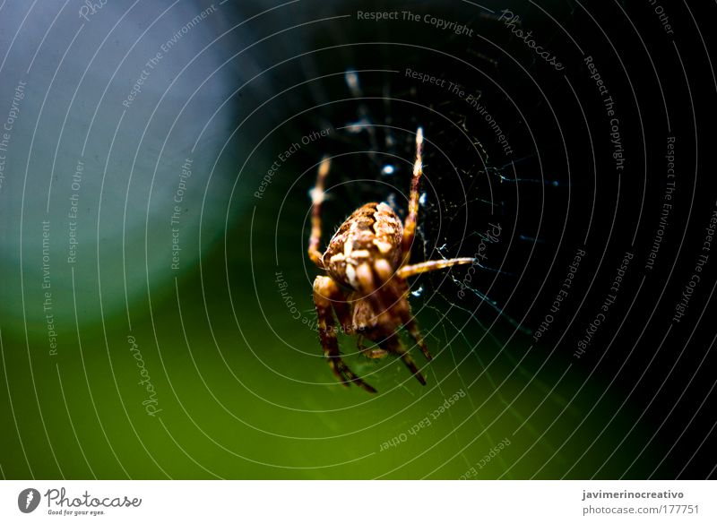 Araneus Green Animal Fear Transparent Spider