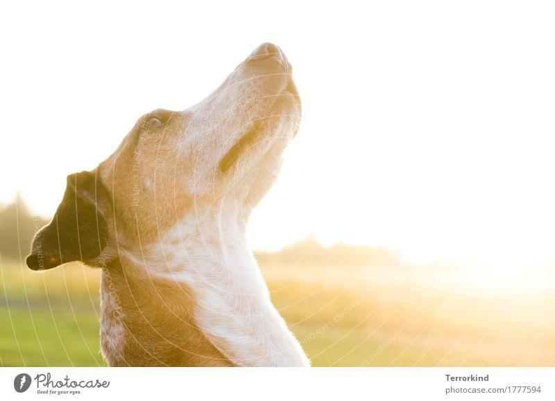 Dog Beautiful Green White Animal Calm Black Yellow Brown Friendship Gold Elegant Communicate Esthetic Sit Idyll