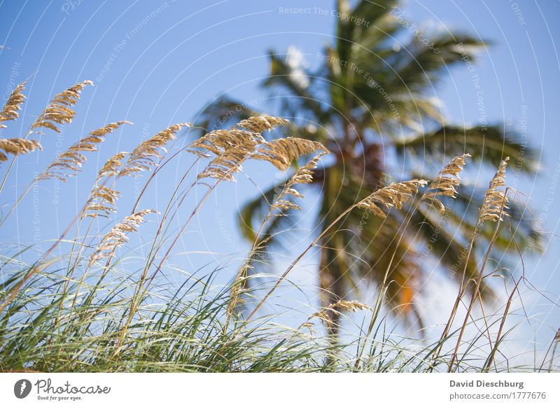 Nature Vacation & Travel Plant Blue Summer Green Landscape Ocean Far-off places Beach Yellow Grass Coast Tourism Waves Island