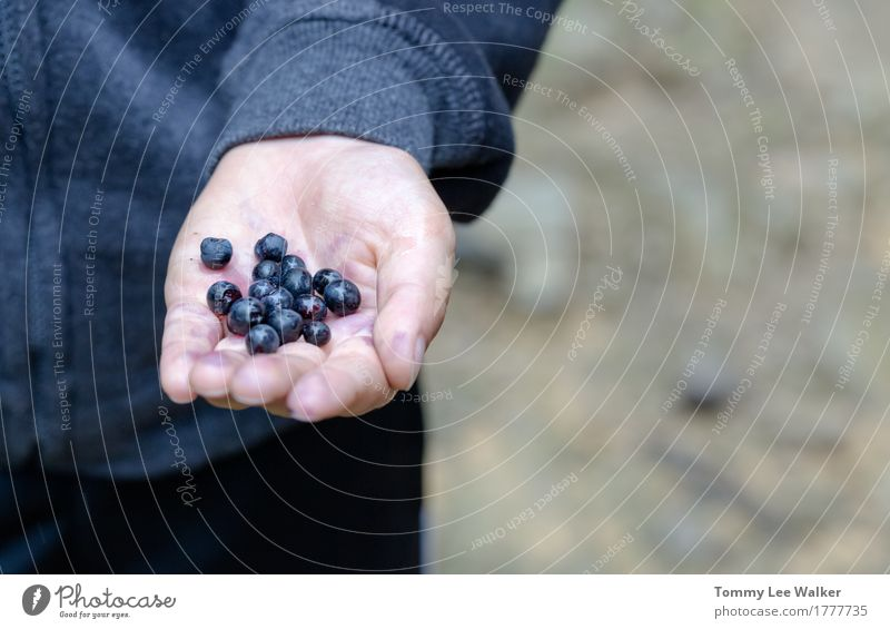 Handpicked blueberries Human being Child Nature Blue Summer Beautiful Healthy Eating Relaxation Forest Life Lifestyle Small Food Freedom