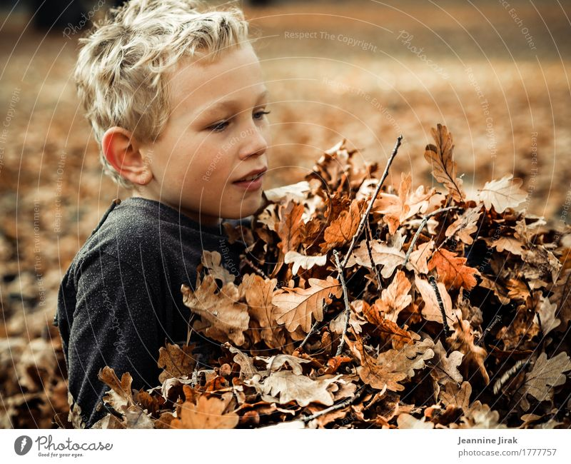 Human being Child Nature Leaf Joy Environment Warmth Autumn Healthy Boy (child) Playing Illuminate Park Leisure and hobbies Contentment Blonde