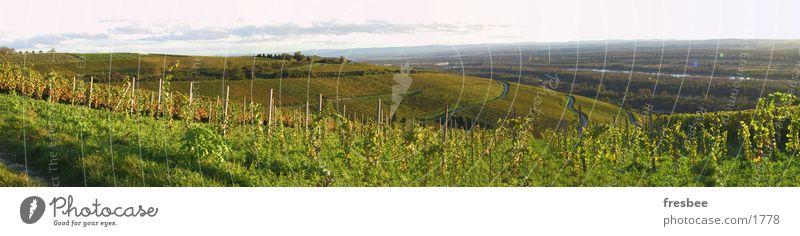 autumn Green Vine Autumn Evening sun pano Landscape To go for a walk Sun
