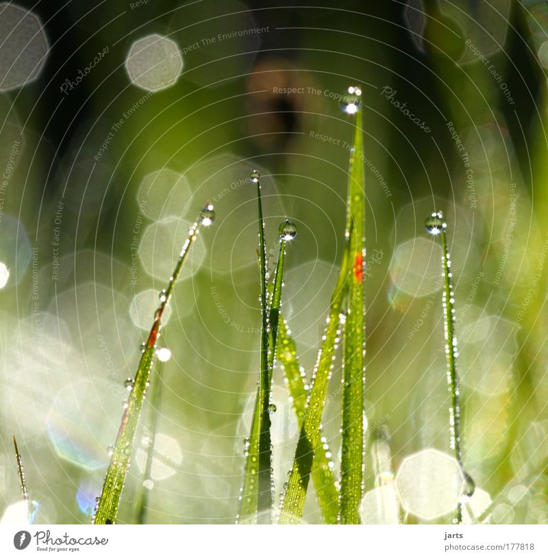 Nature Water Beautiful Green Plant Summer Calm Meadow Grass Contentment Bright Field Glittering Drops of water Fresh Esthetic