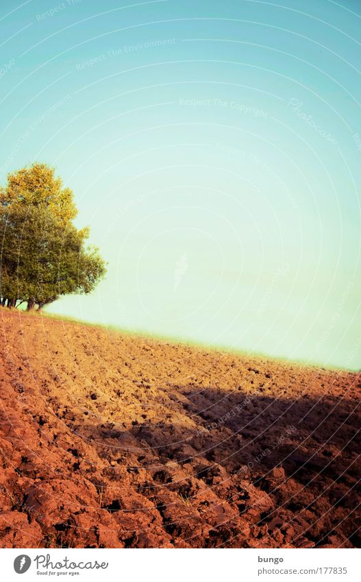 Nature Green Tree Environment Landscape Horizon Brown Earth Field Esthetic Growth Ground Change Idyll Infinity Beautiful weather
