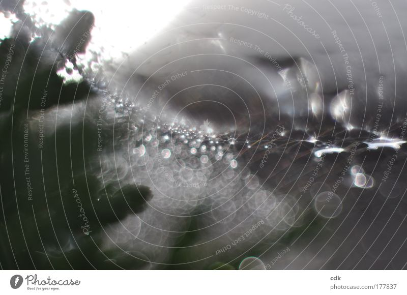 Nature Water Movement Gray Dream Glittering Environment Drops of water Circle Esthetic Network Threat Transience Creepy