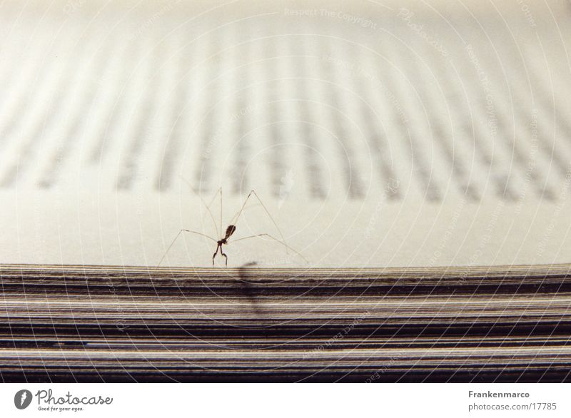 Book Loneliness Insect Page Mantids