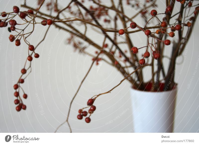 Hiffen branch Colour photo Subdued colour Interior shot Close-up Deserted Living or residing Decoration Moody Twigs and branches Berries Fruit Red Vase