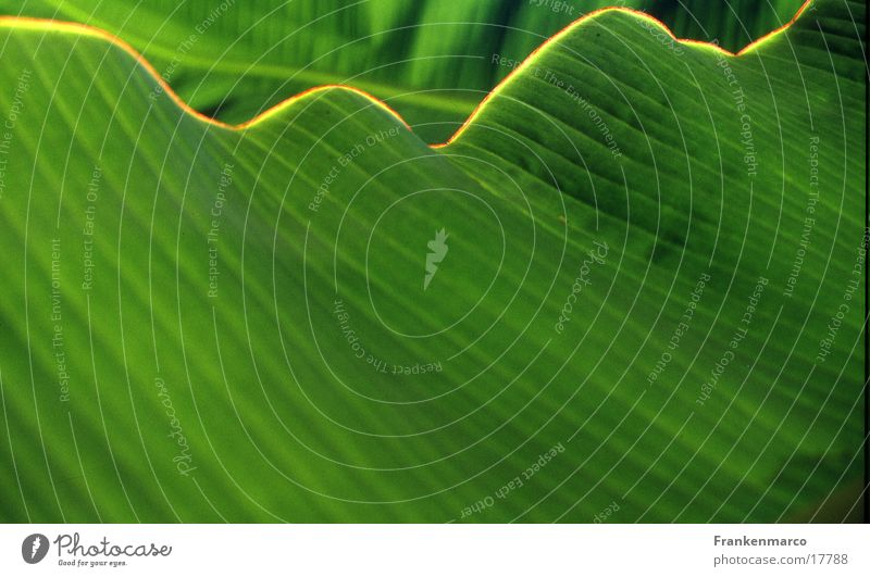 Green Leaf Waves Surface