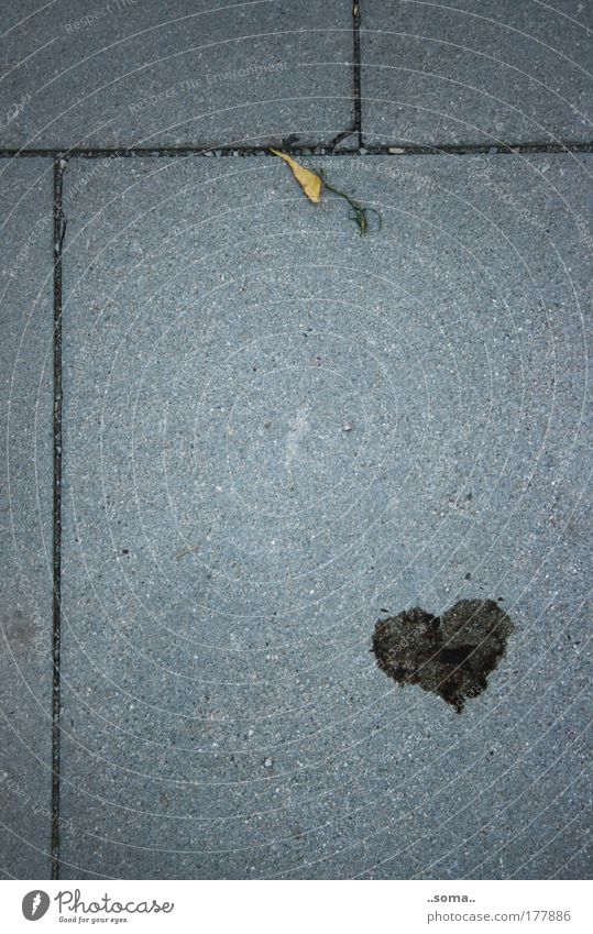 Leaf Loneliness Emotions Gray Happy Stone Heart Dirty Concrete Hope Transience Simple Longing Firm Sign Discover