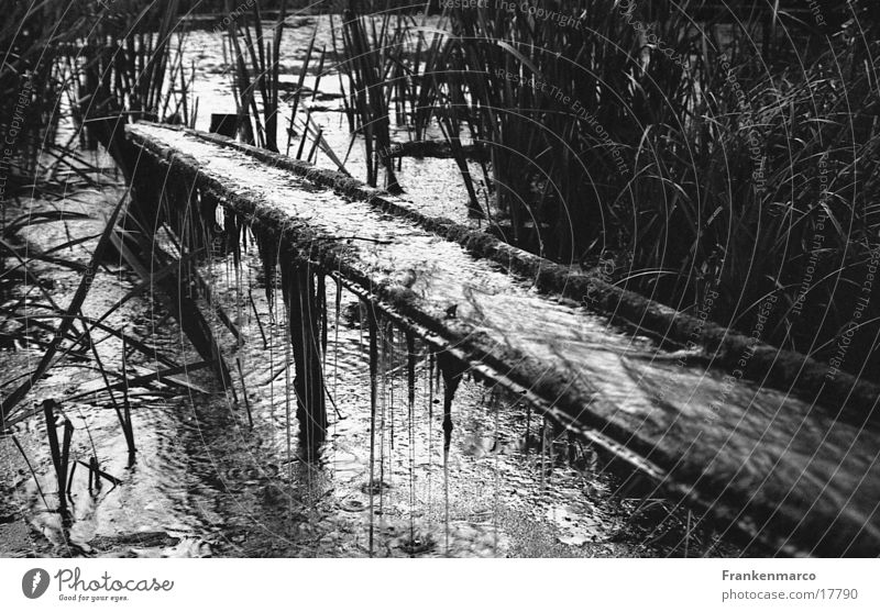 pond channel Pond Gutter Gloomy Common Reed Water Drops of water Black & white photo