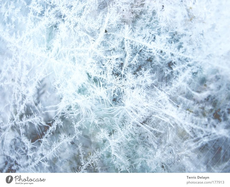 Nature Water White Blue Winter Cold Window Ice Detail Glittering Glass Wet Growth Frost Drop Living or residing