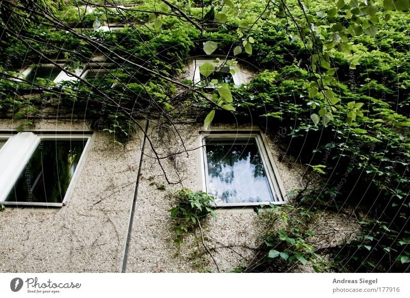 Nature Green Tree Plant Loneliness House (Residential Structure) Window Wall (building) Architecture Gray Building Wall (barrier) Sadness Facade Concrete