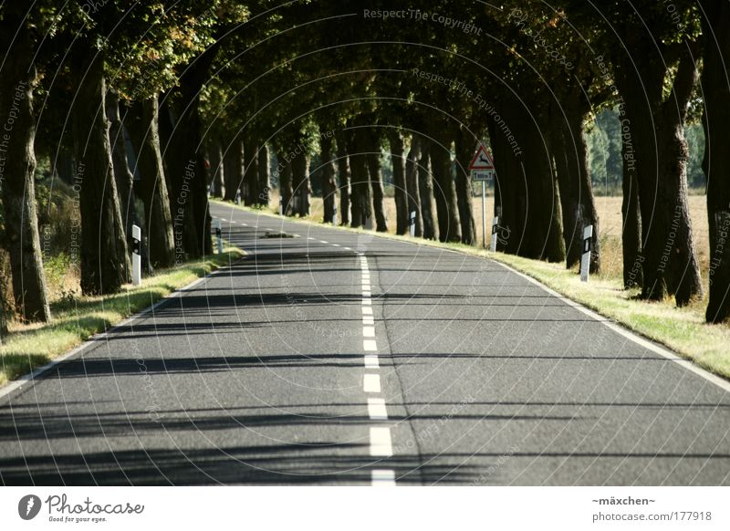 Nature White Green Tree Red Sun Summer Black Yellow Street Environment Gray Movement Lanes & trails Brown Field