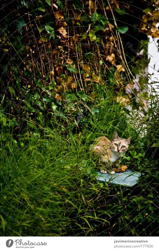 Bastet Colour photo Exterior shot Plant Grass Garden Cat Green Free-living Domestic cat Prowl Looking into the camera Observe Attentive Watchfulness Day