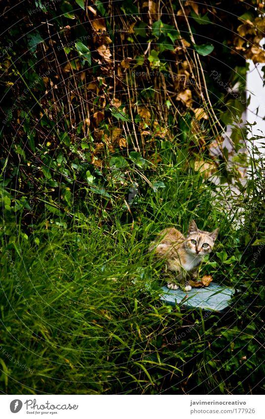 Bastet Green Plant Garden Grass Cat Observe Watchfulness Domestic cat Attentive Free-living Prowl