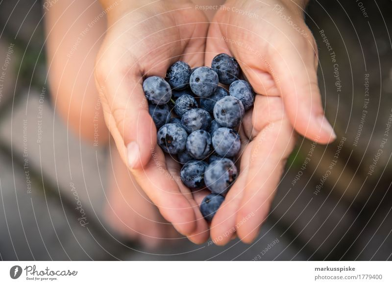 fresh organic blueberry harvest Food Fruit Blueberry Accumulate Harvest Nutrition Eating Organic produce Vegetarian diet Diet Fasting Slow food Finger food