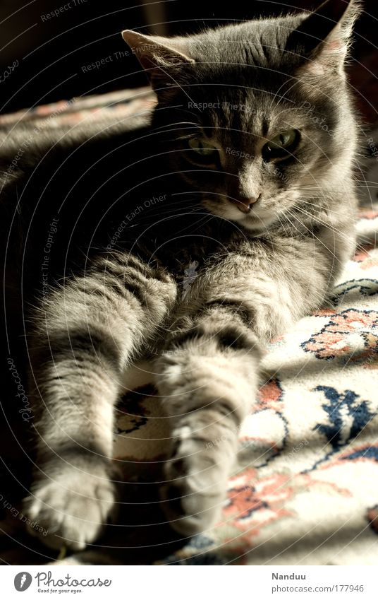 Beautiful Animal Relaxation Emotions Happy Cat Warmth Contentment Moody Flat (apartment) Elegant Cool (slang) Soft Lie Living or residing