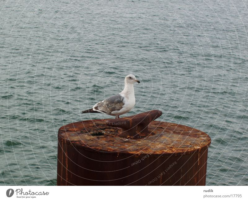 Ocean Lake Bird Rust Seagull San Francisco