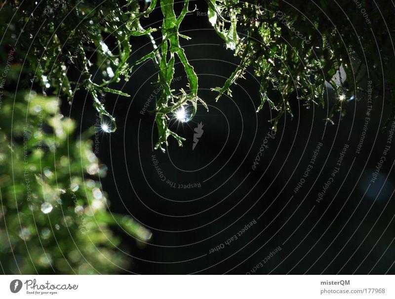 Nature Water Green Plant Calm Environment Dark Rain Glittering Drops of water Idyll Drop Mysterious Damp Dew Moss