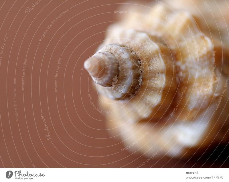 dream shell Colour photo Blur Environment Nature Coast Beach Ocean Brown Mussel Shell-shaped Memory Vacation & Travel