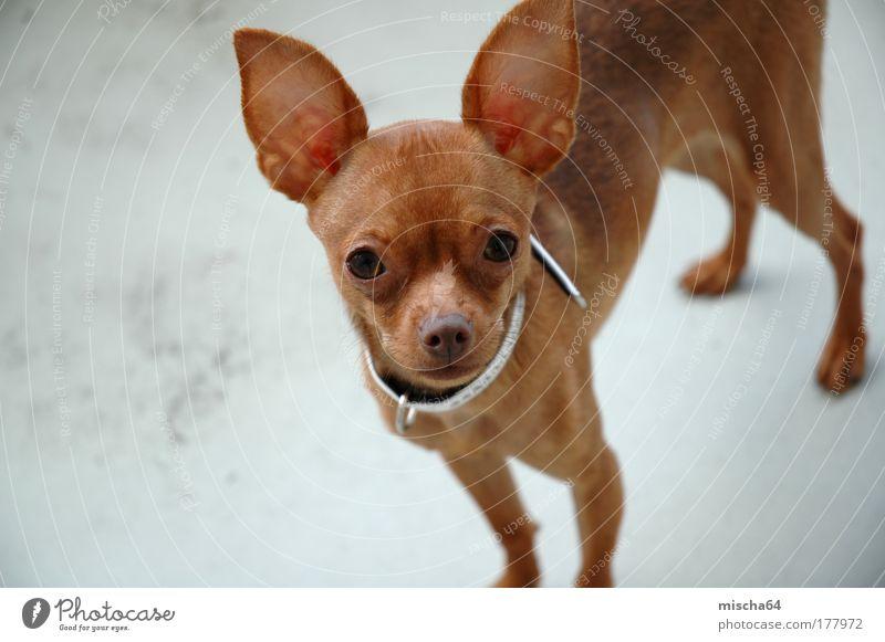 Dog Summer Animal Emotions Baby animal Esthetic Pet