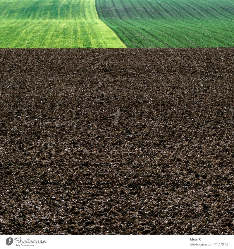 Nature Plant Meadow Spring Landscape Field Earth Trip Modern Gloomy Agriculture Organic farming Sowing Biological