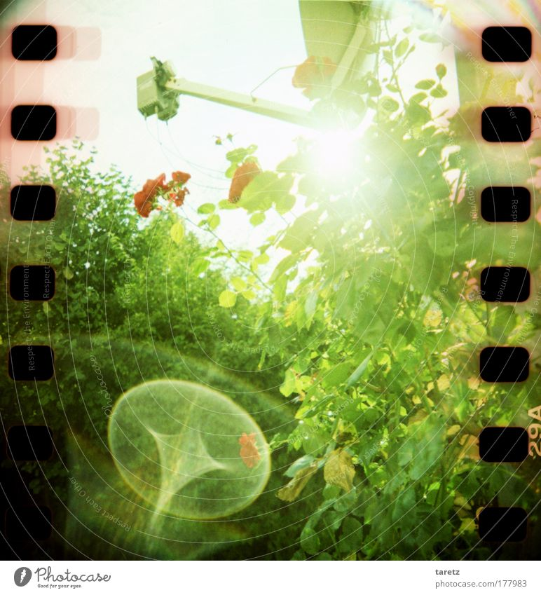 Green Red Sun Plant Summer Flower Leaf Blossom Bright Energy Lomography Rose Bushes Radiation Beautiful weather Perforation