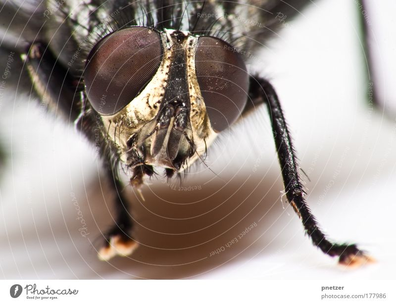Nature Red Animal Gray Fear Dirty Small Fly Environment Flying Animal face Threat Wing Wild Wild animal Disgust