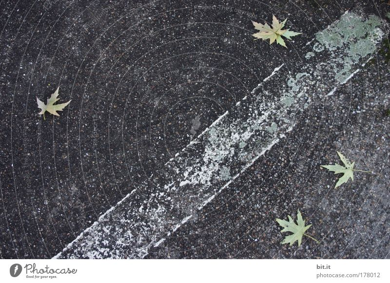 White Leaf Black Colour Street Environment Lanes & trails Stone Line Contentment Signs and labeling Concrete Climate Gloomy Stripe To fall