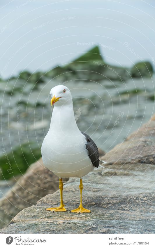 Food? Animal Bird 1 Looking White Seagull Gull birds Beg Yellow Animal portrait Deserted