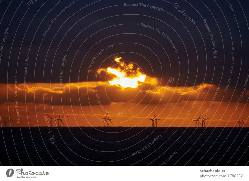 Sunset over offshore wind farm Energy industry Renewable energy Wind energy plant Nature Elements Water Sky Clouds Sunrise Ocean North Sea Island Sylt Romance