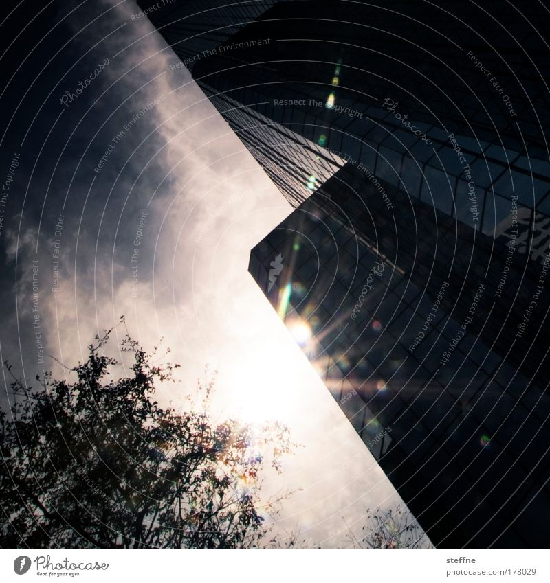 Blue City Tree Sun Summer Clouds Warmth High-rise USA Bank building Violet Skyline Beautiful weather Florida Tampa