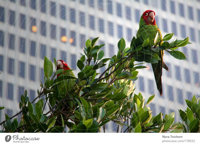 Nature Tree Vacation & Travel Plant Summer Leaf Animal House (Residential Structure) Window Building Park Bird Flying Wild animal High-rise Crazy