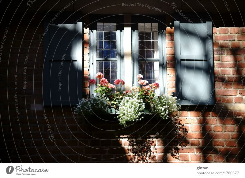 Old Flower House (Residential Structure) Architecture Facade Glittering Decoration Blossoming Brick Nostalgia Shutter Adornment Half-timbered facade Niche Preservation of historic sites Half-timbered house