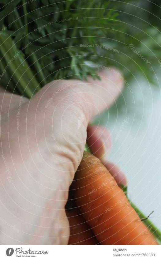 carrot harvest Food Vegetable Lettuce Salad Carrot Root vegetable Vegetables for soup Nutrition Organic produce Vegetarian diet Diet Lifestyle Healthy Garden
