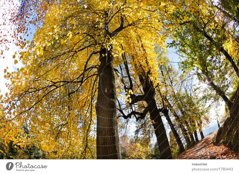 Deciduous tree forest in autumn season Nature Plant Summer Green Tree Landscape Forest Yellow Autumn Horizontal Wilderness