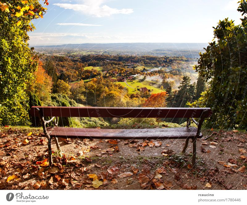 Bench in a park with views of the countryside in autumn season Nature Plant Summer Green Tree Landscape Forest Yellow Autumn Bench Horizontal Wilderness
