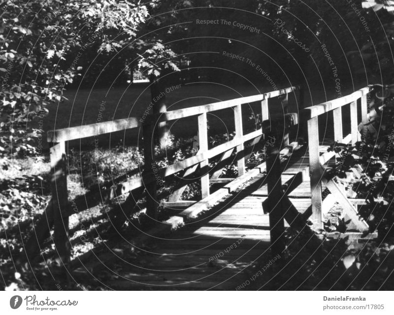 Where are you going? Wood Forest Black & white photo Bridge Lanes & trails Nature Shadow Sun
