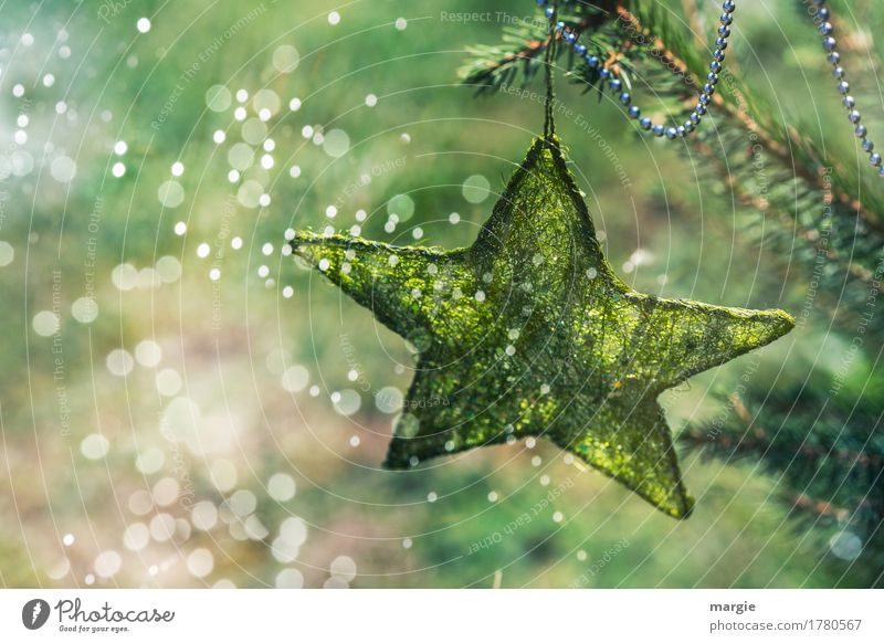 Shooting stars: green star with chain on the Christmas tree surrounded by many lights Feasts & Celebrations Christmas & Advent New Year's Eve Tree Foliage plant