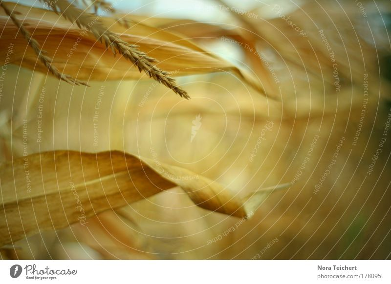 AutumnGold Colour photo Subdued colour Exterior shot Close-up Detail Experimental Abstract Deserted Day Light Shadow Light (Natural Phenomenon) Sunlight Blur